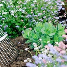 3 Weeds to Pull From Your Marriage Garden